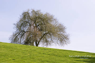 Photograph - Lonely Tree by Mick Anderson