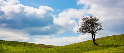 Photograph - Lonely Tree Panorama by Semmick Photo
