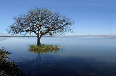 Y120831 Photograph - Lonely Tree by Saul Landell / Mex
