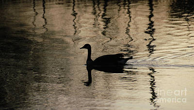 Art Print featuring the photograph Lonely by Vilas Malankar