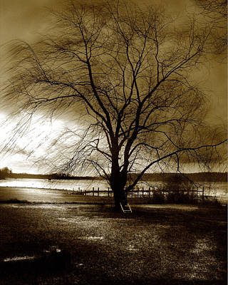 Photograph - Lonely Willow by Marilyn Marchant