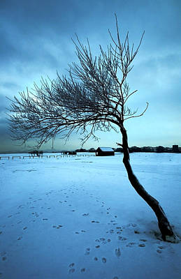 Lonely Winter Tree Art Print by Svetlana Sewell