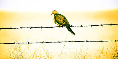 Photograph - Lonesome Dove by Steve McKinzie