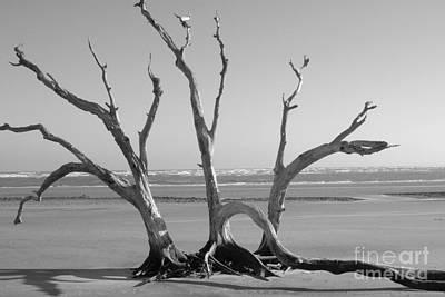 Lonesome Tree Art Print by Melody Jones