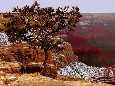 Photograph - Lonesome Tree Over Grand Canyon by Cindy Wright