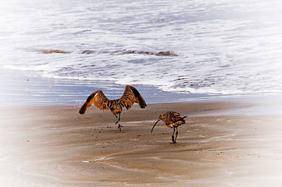Photograph - Long Billed Curlews by Mickey Clausen