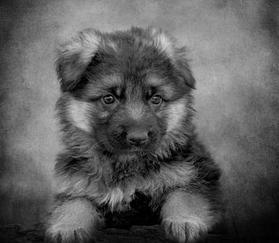 Long Coated Puppy II Art Print by Sandy Keeton