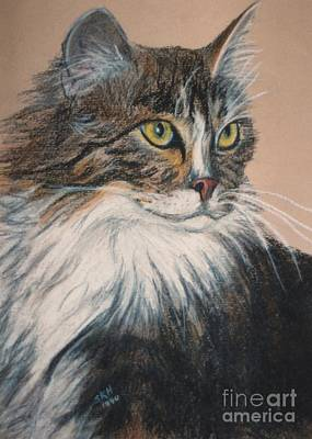 Pastel - Long Hair Cat by Susan Herber