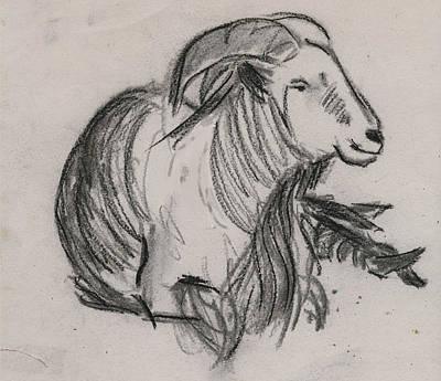 Long Horn Mountain Goat Art Print by Ethel Vrana