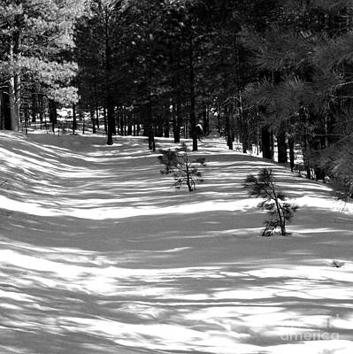 Pine Needles Photograph - Long Shadows by Julie Lueders