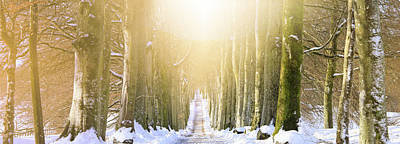 Lights In Tunnel Photograph - Long, Snowy Tree-lined Avenue by Kathy Collins