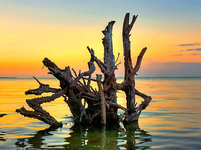Photograph - Longboat Key Tree by Jenny Ellen Photography