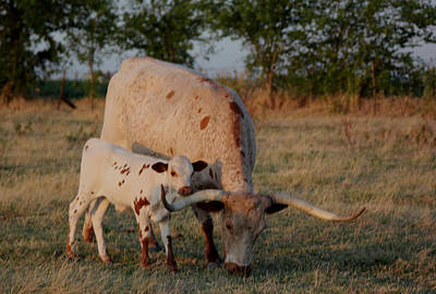 Longhorn Cow And Calf Art Print by Paul Louis Mosley