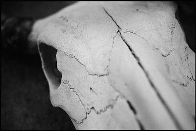 Photograph - Longhorn Skull by Julie VanDore