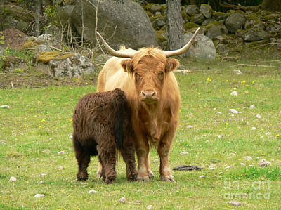 Photograph - Longhorn With Calf by Ed Churchill