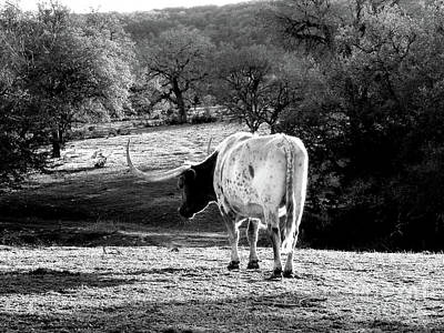 Cow Humorous Photograph - Longhorns Long Day by Joe Jake Pratt