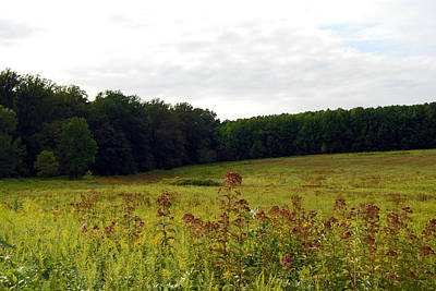 Photograph - Longwood Meadow by Harvey Barrison