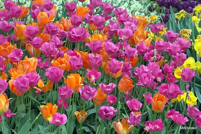 Longwood Tulips Original