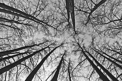 Photograph - Look Up by Michael Goyberg