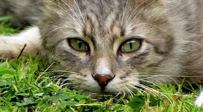 Photograph - Looking At Me by Barbara Walsh