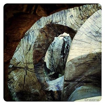 Abstract Wall Art - Photograph - Looking Through by Natasha Marco