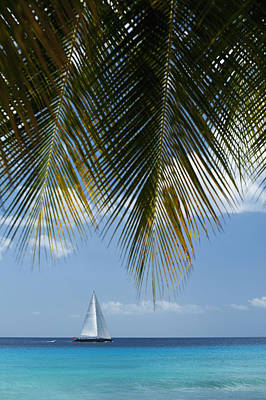 Looking Through Palm Trees To Large Art Print by Axiom Photographic