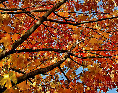 Photograph - Looking Through Red And Yellow Trees by Alexandra Jordankova