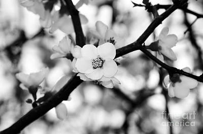 Looking Through The Blossoms - Black And White Art Print by Kaye Menner
