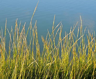 Photograph - Looking Through The Marsh Grass by Eve Spring