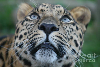 Looking Up Art Print by Carol Wright