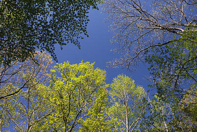 Photograph - Looking Up In Spring by Daniel Reed