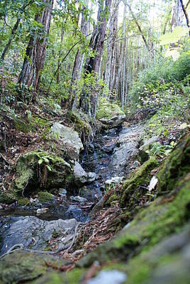 Photograph - Looking Up The Creek In A Redwood Forest On Mt Tamalpais by Ben Upham III