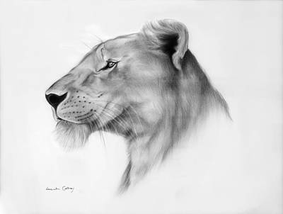 African Big Cats Drawing - Lookout by Lucinda Coldrey