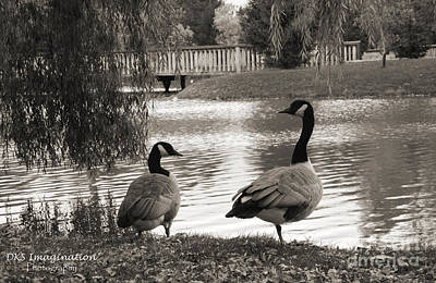 Loonie Photograph - Loonie Ducks by DKS Imagination