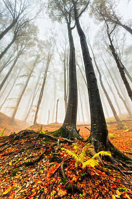 Central Balkan Photograph - Lords Of The Forest by Evgeni Dinev