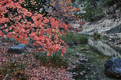 Photograph - Lost Maples Fall Afternoon by James Woody