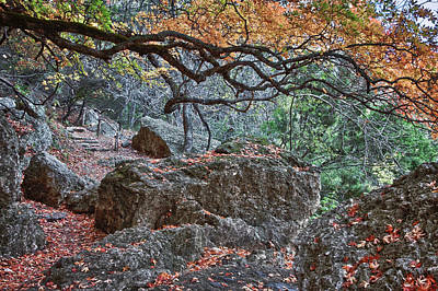 Photograph - Lost Maples Hiking Trail by James Woody