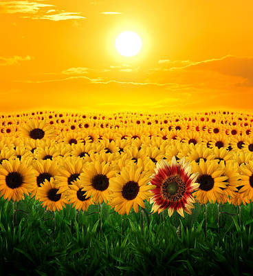 Lost Sunflower Original