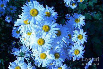 Art Print featuring the photograph Lot Of Daisies by AmaS Art