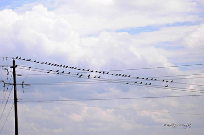 Photograph - Lots Of Birds On Wires by Paulette B Wright