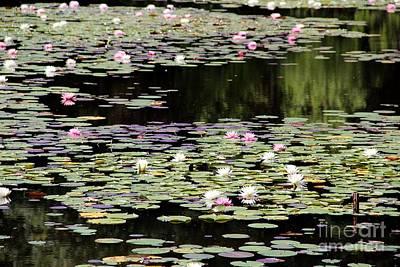 Dragonflys Photograph - Lotus Above Lotus Below by Pauline Ross