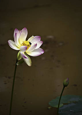 Lotus Blossoms Photograph - Lotus And Friend by Rob Travis