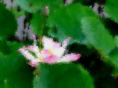 Photograph - Lotus And Green Leaves by Chua  ChinLeng