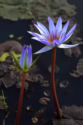 Cambodia Photograph - Lotus Blooms by Nabil Kannan