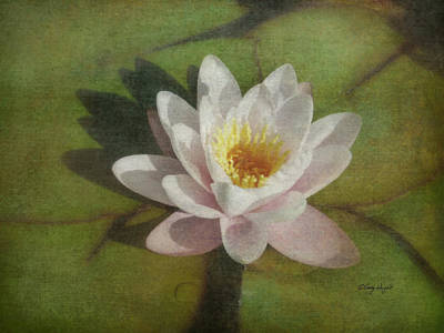 Photograph - Lotus Blossom Textured by Cindy Wright
