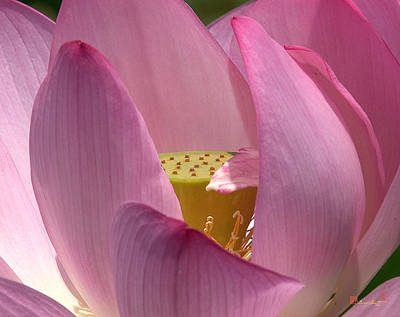 Photograph - Lotus--center Of Being I Dl022 by Gerry Gantt