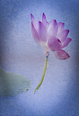 Digital Art - Lotus Dream by Jill Balsam