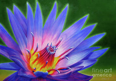 Buddhism Painting - Lotus by Jurek Zamoyski