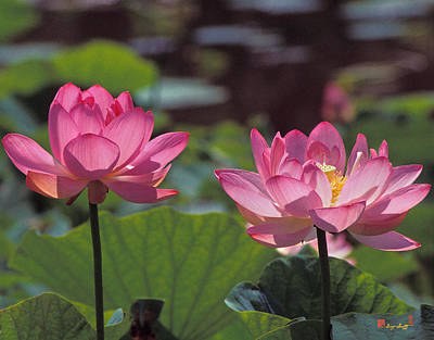 Photograph - Lotus Pair 24m by Gerry Gantt