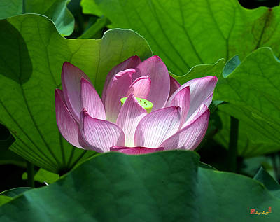 Photograph - Lotus--peeking Out I Dl016 by Gerry Gantt